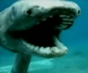 Frilled_shark